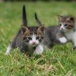 Les chats seraient-ils les meilleurs amis des seniors ?