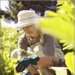 Fondation Georges Truffaut : les bienfaits du jardin contre la maladie d'Alzheimer