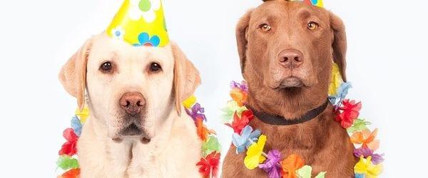 Journée mondiale du chien, ou quand les animaux redonnent le sourire aux seniors