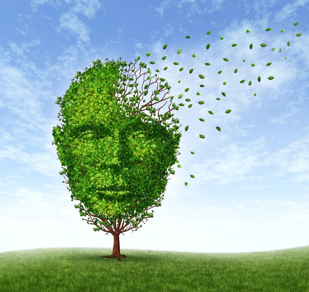 Alzheimer : mémoire qui s'évapore dans un arbre