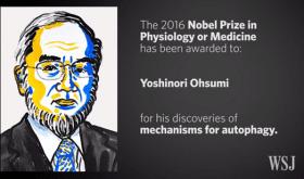 Yoshinori Ohsumi reçoit le prix Nobel de Physiologie/Médecine