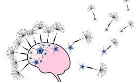 Un potentiel traitement anti-Alzheimer fondé sur une nouvelle molécule : la verubecestat