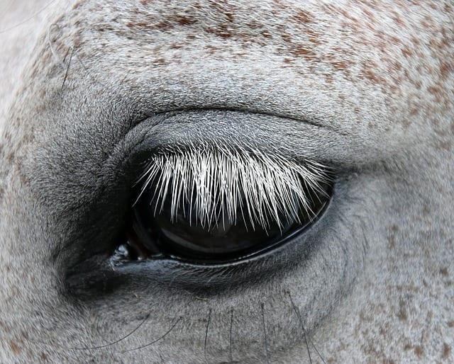 Thérapie et médiation par le cheval