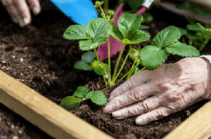 Un nouveau jardin th rapeutique terramie au sein de l for Jardin therapeutique