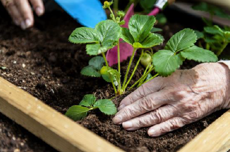 Alzheimer quand les souvenirs remontent la surface for Jardin therapeutique
