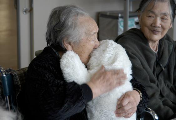 Paro le robot bébé Phoque aide au bien être des malades Alzheimer