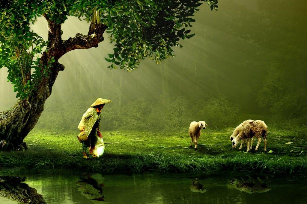 Nature et personnes âgées