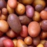La consommation régulière de pommes de terre augmente le risque de diabète