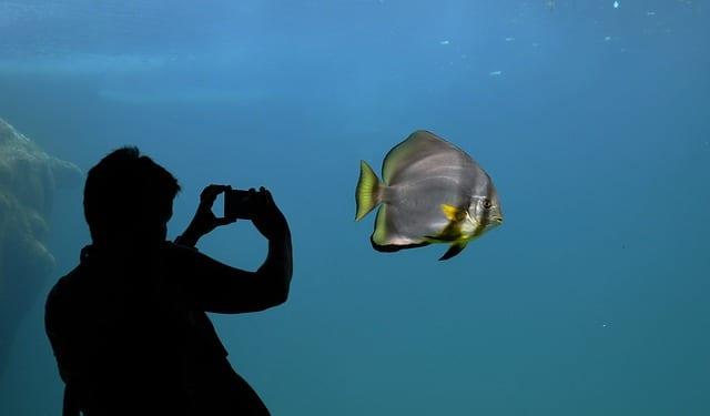Photographie d'un poisson dans un aquarium