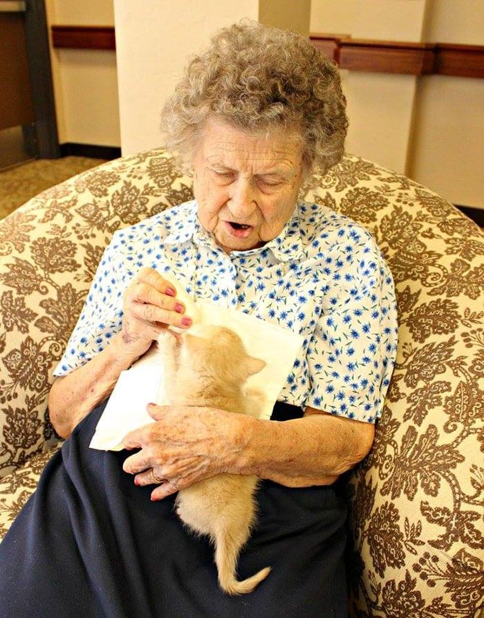Une maison de retraite qui accueille des chatons