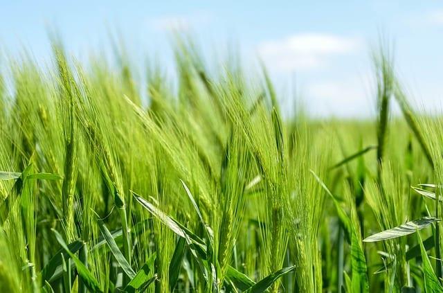 Parkinson et agriculture