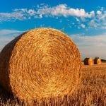 Un risque accru de Parkinson à proximité des zones agricoles