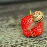 Et si vous utilisiez la bave d'escargot comme anti-âge ?