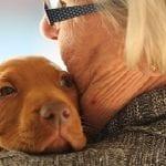 Les chiens détecteraient-ils la maladie de Parkinson de manière précoce ?