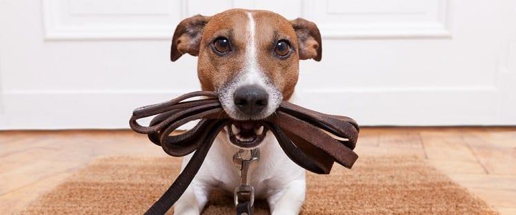 Etude : pour vivre en meilleure santé, adoptez un chien !