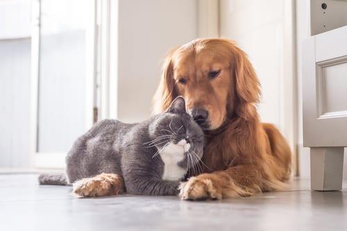 Chiens et chats - Animaux de compagnie - Animal - Zoothérapie