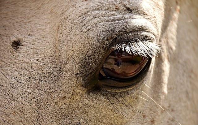 Cheval - Poney - Zoothérapie - Equithérapie