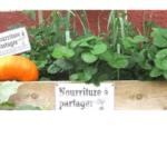 Le Groupe Colisée devient partenaire des «Incroyables Comestibles»