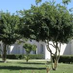 Le groupe de résidences services seniors Les résidentiels obtient le label Lucie 26000