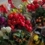 Covid-19 : Une livraison de tulipes pour les résidences services seniors Espace & Vie